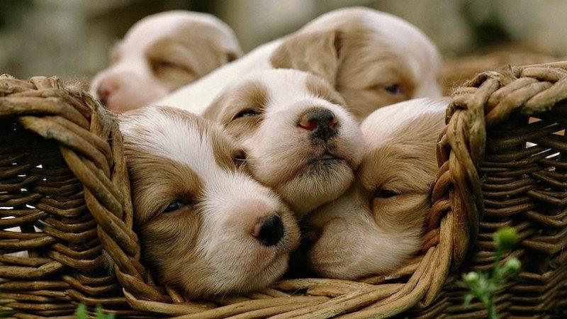 animal-sleep