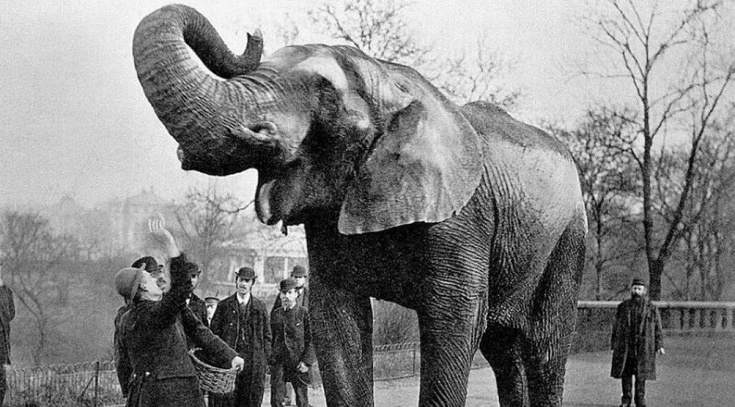 Edam edilərək öldürülən fil